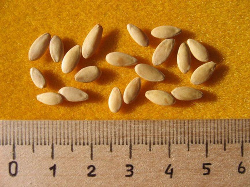 Отборные семена