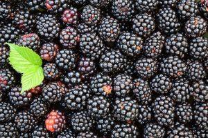 Ежевика: описание 17 лучших сортов, особенности выращивания, размножение и уход (30 Фото) +Отзывы