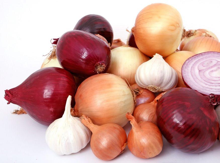 Сорта лука, выращиваемые в южных и северных регионах