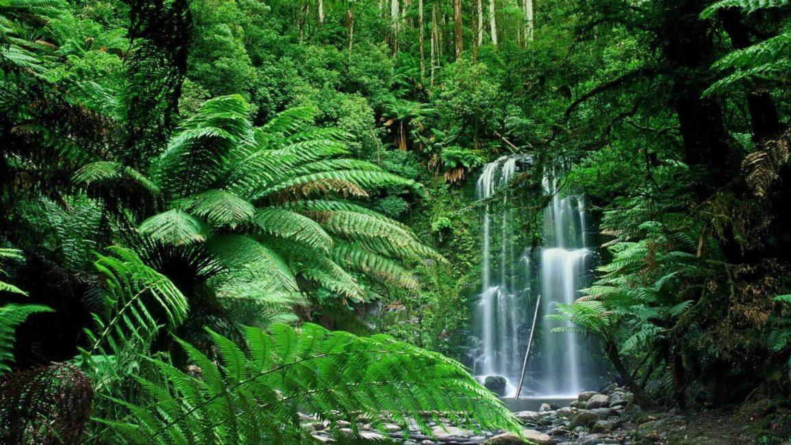 Тропические джунгли с двукрылоплодниками в верхнем ярусе и пальмами в среднем.