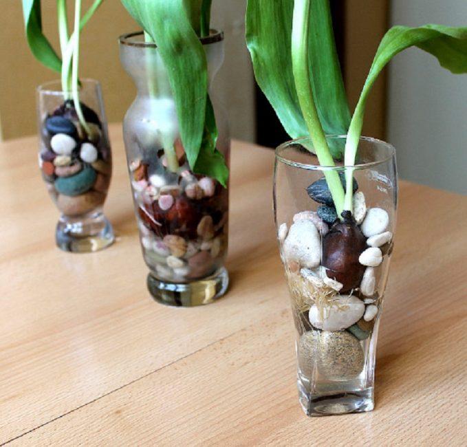 Выращивание тюльпанов без земли с использованием дренажа