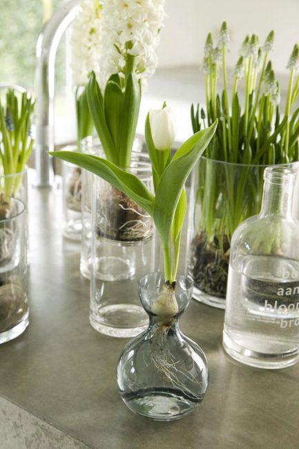 Специальная ёмкость для выращивания тюльпанов в воде
