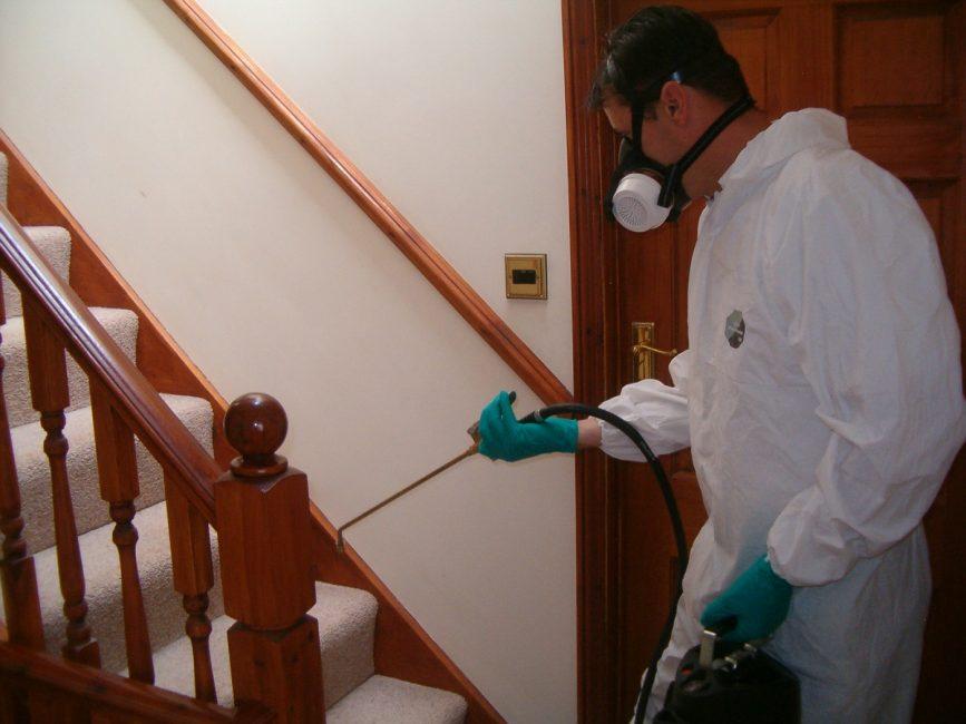 Служба по уничтожению насекомых в квартире