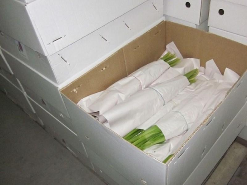 Сухое хранение тюльпанов