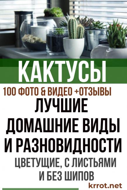 Виды и разновидности домашних кактусов с названиями