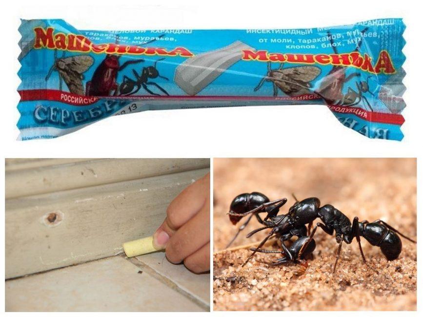 карандаши против муравьев