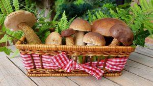 Съедобные и несъедобные грибы, грибы-двойники. Самые распространенные 16 видов с названиями и подробным описанием (Фото & Видео) +Отзывы