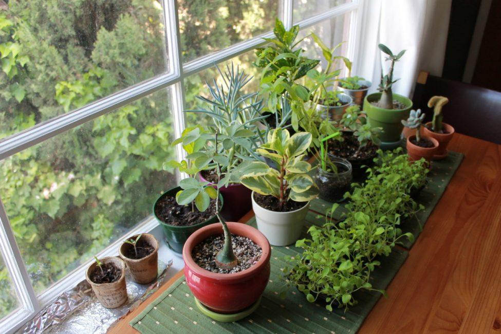 растения на подоконике