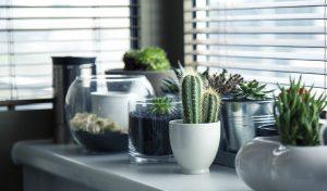 Виды и разновидности домашних кактусов с фото – названия, описания, уход
