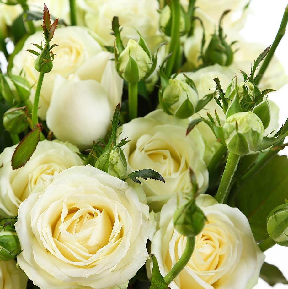 Бело-зеленые розы картинки цветы