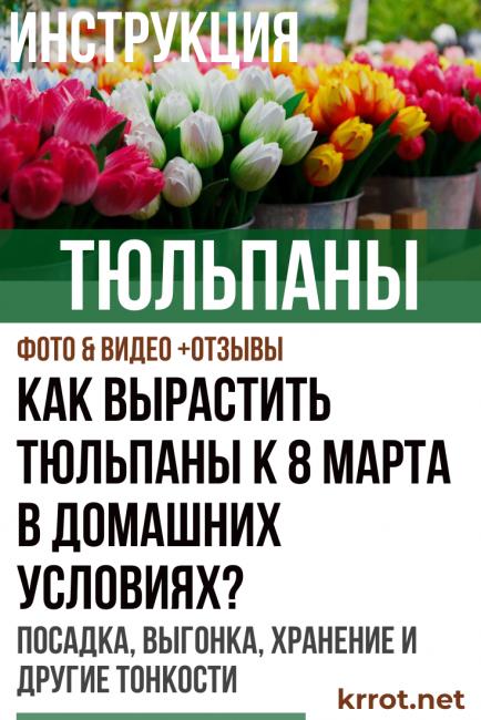 тюльпаны к 8 марта в домашних условиях