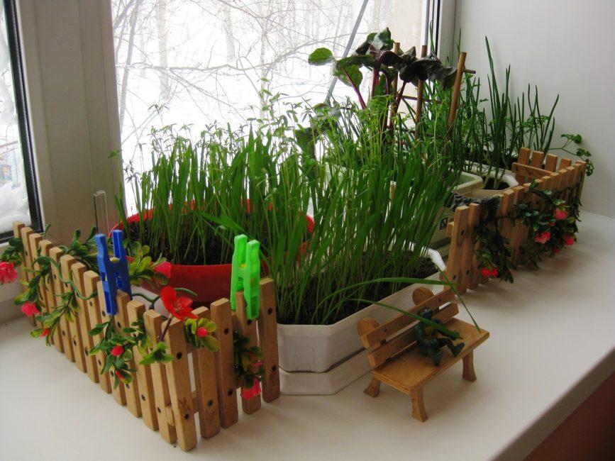 Мини-сад на подоконнике: всю зиму с витаминами