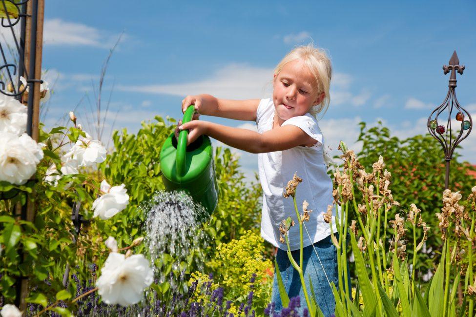 В обычном температурном режиме, когда нет сильной жары, полив клематиса производится 1 раз в неделю
