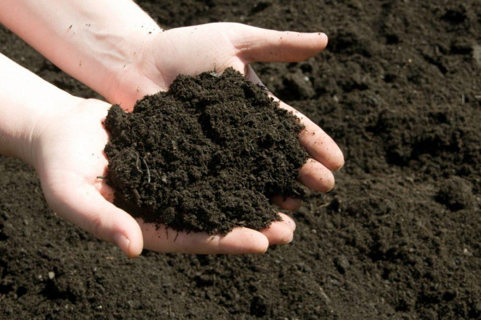 Растение требует рыхлой и лёгкой почвы.