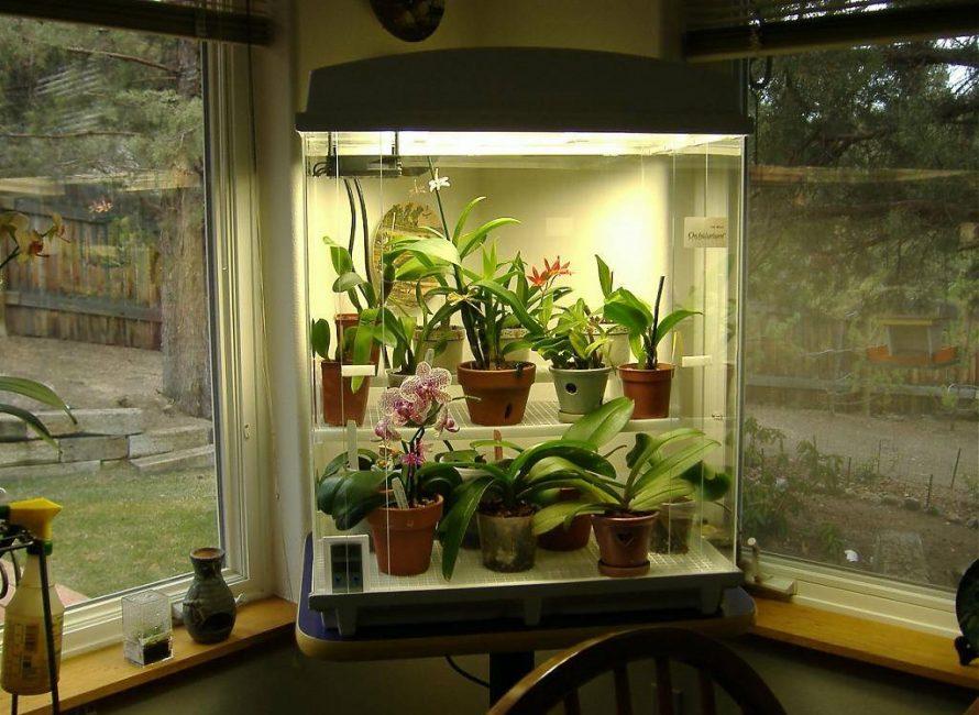 Искусственное освещение для домашних растений
