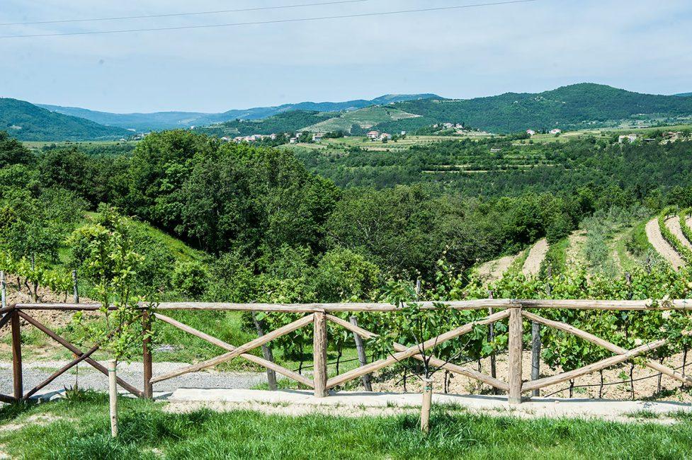 Трюфельная ферма в поле