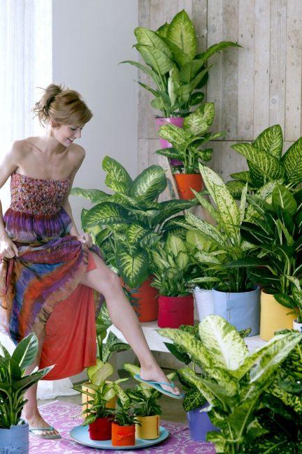 Девушка в цветах Диффенбахии