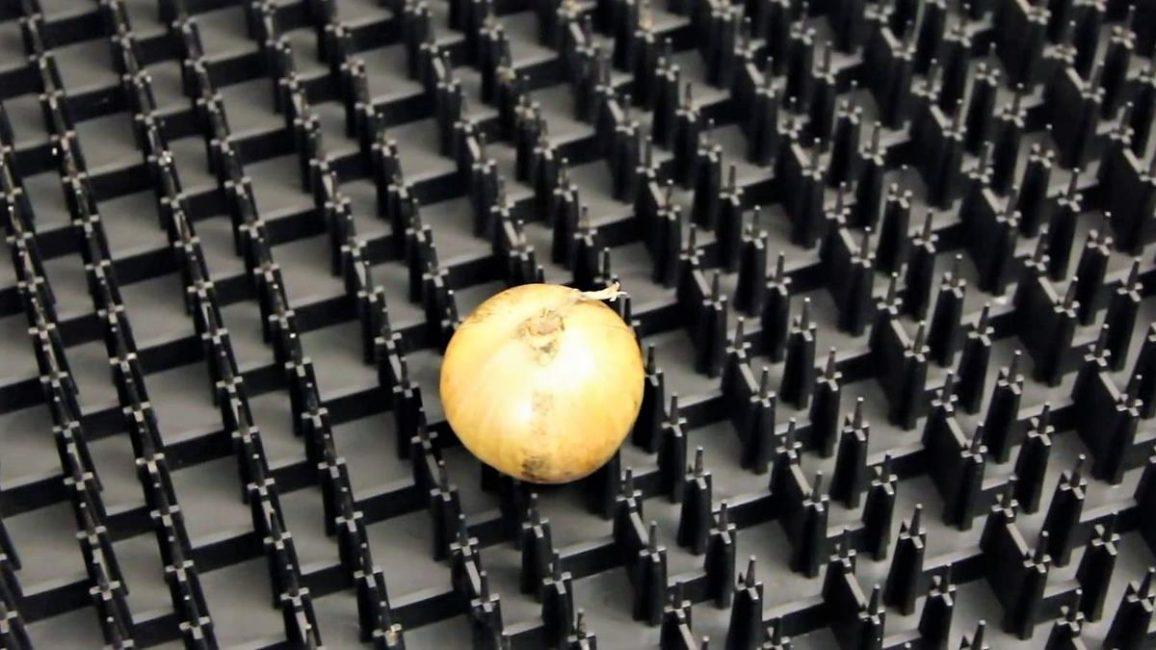 Выгонка луковиц на перо в специальных ящиках.