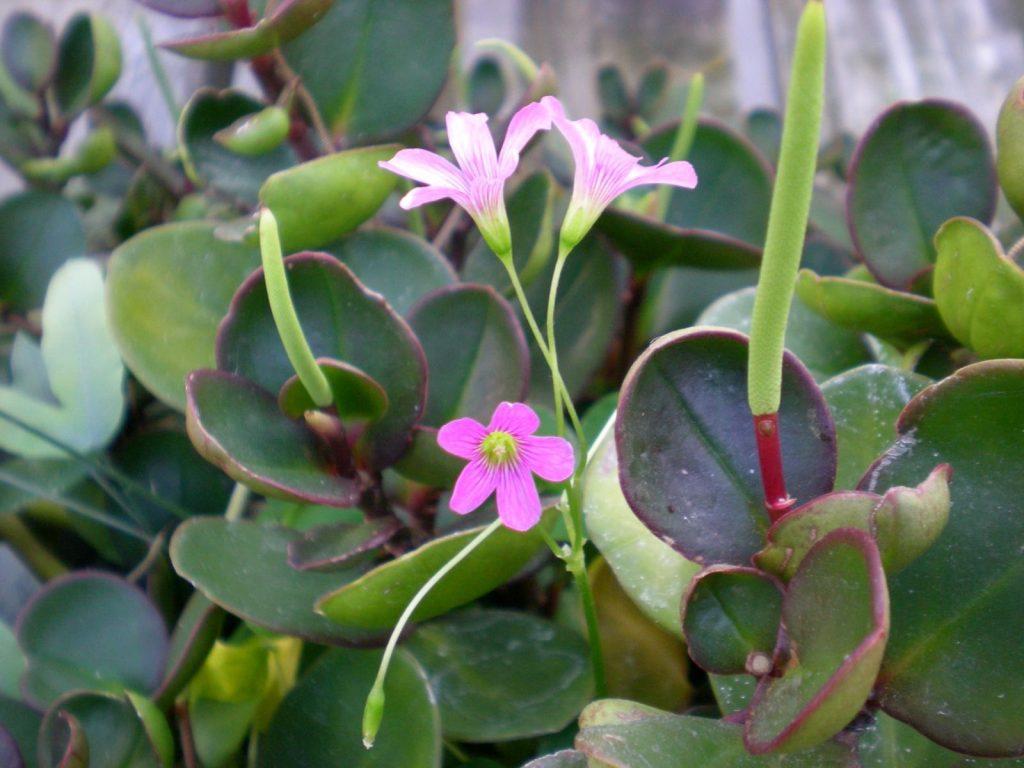 Цветок 22