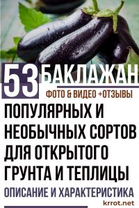 Баклажаны: описание и характеристика 53 популярных и необычных сортов для открытого грунта и теплицы (Фото & Видео) +Отзывы