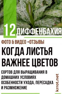 Диффенбахия: описание 12 сортов для выращивания в домашних условиях, особенности ухода, пересадка и размножение (Фото & Видео) +Отзывы