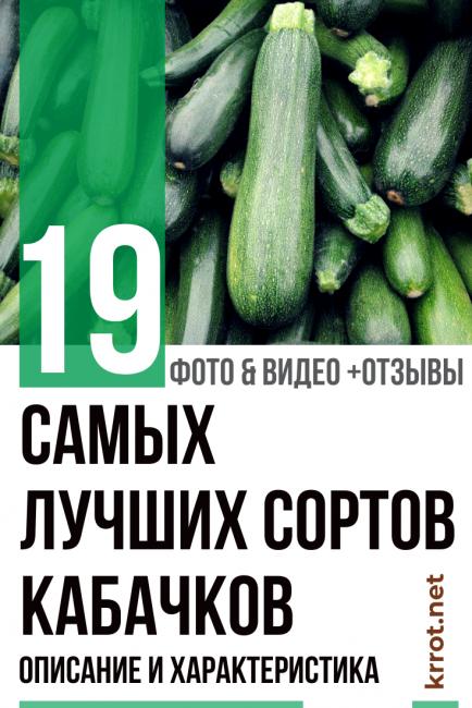 Кабачки - 19 лучших