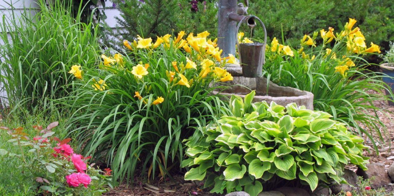 Лилейники в украшении сада