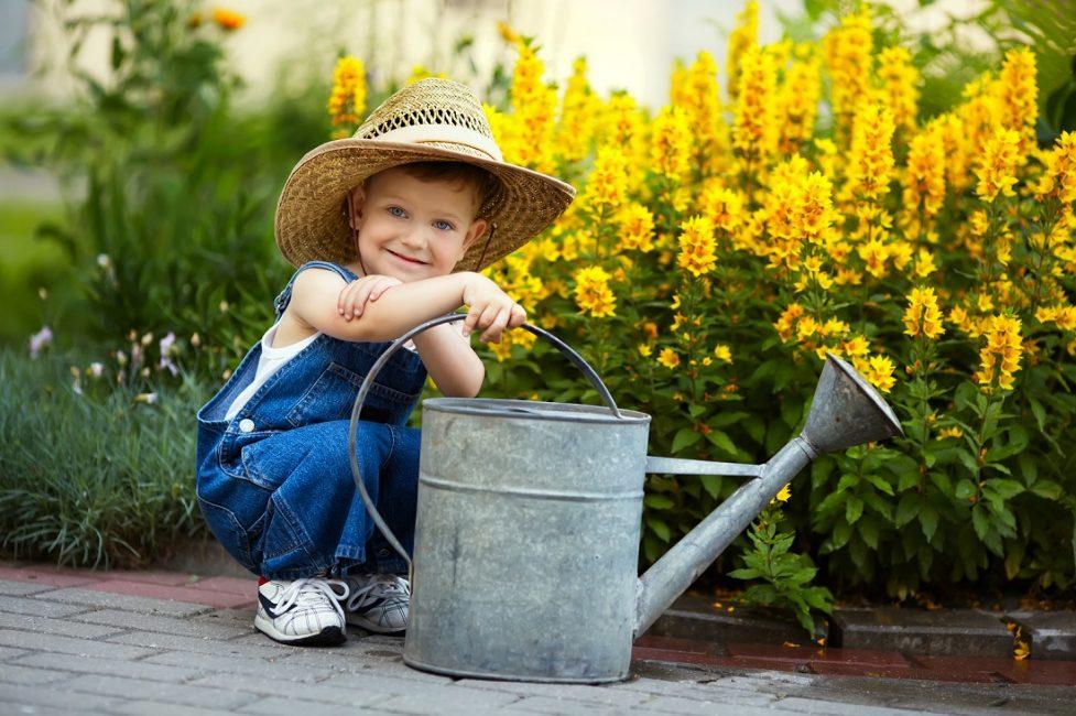 Растение нужно регулярно поливать, особенно в засушливое время