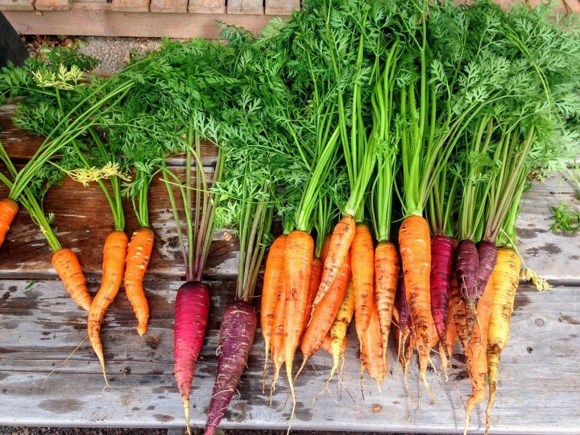 морковь описание сорта