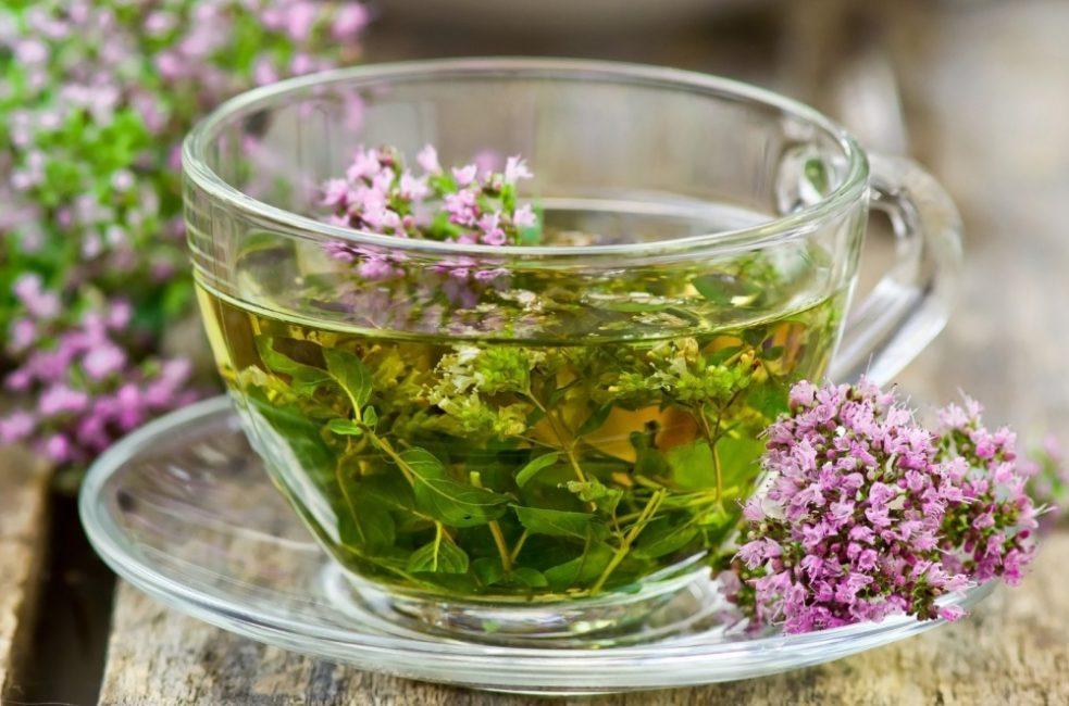 Чай из шалфея розового