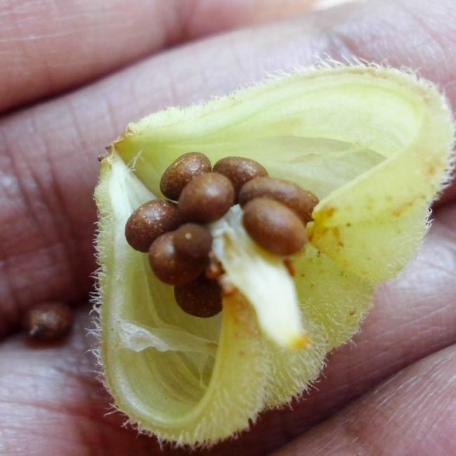 Результат удачного сбора семян
