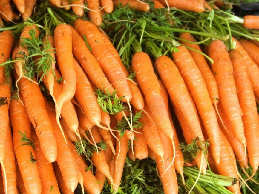 Морковь Сорт Амстердамский