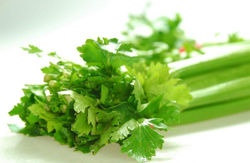 Чтобы получить более ароматную зелень, селеру можно посадить в затемнённый участок
