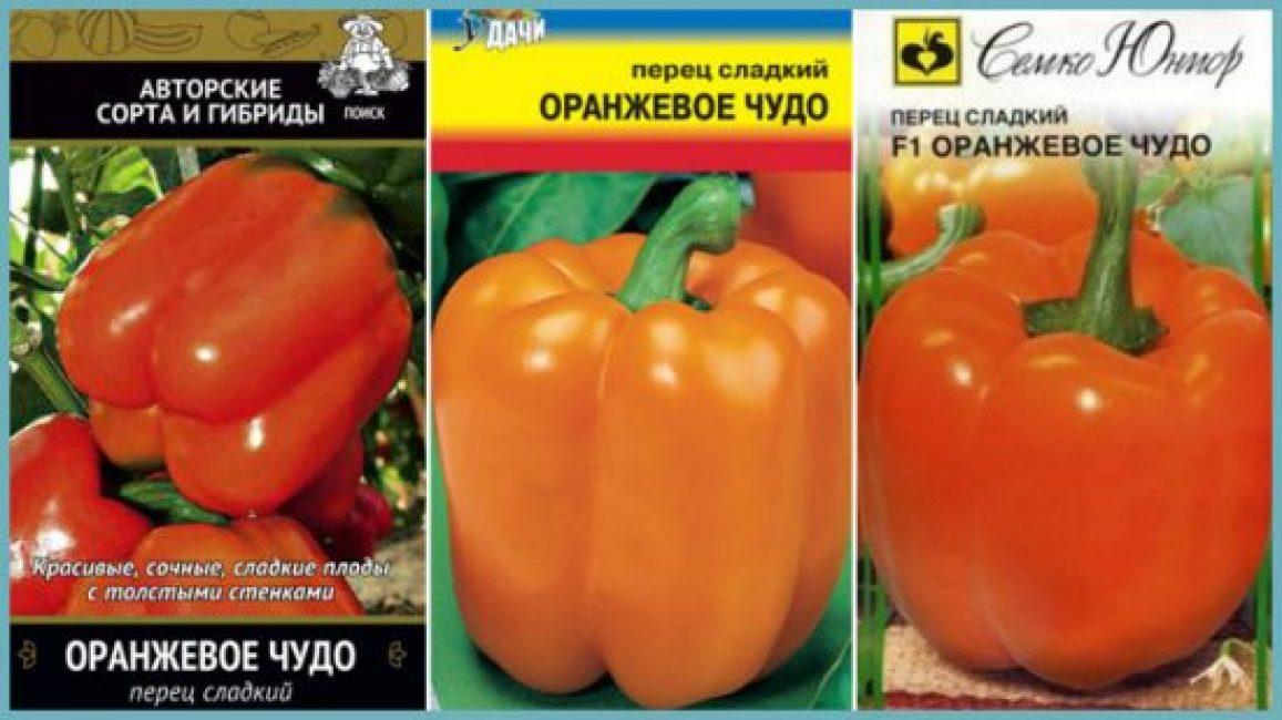 Крупные плоды сорта Оранжевое чудо имеют хорошие товарные качества