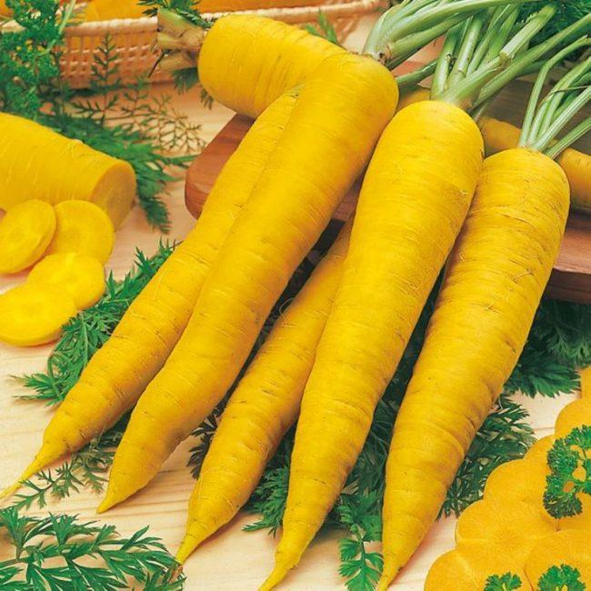 Йеллоустоун сорт моркови