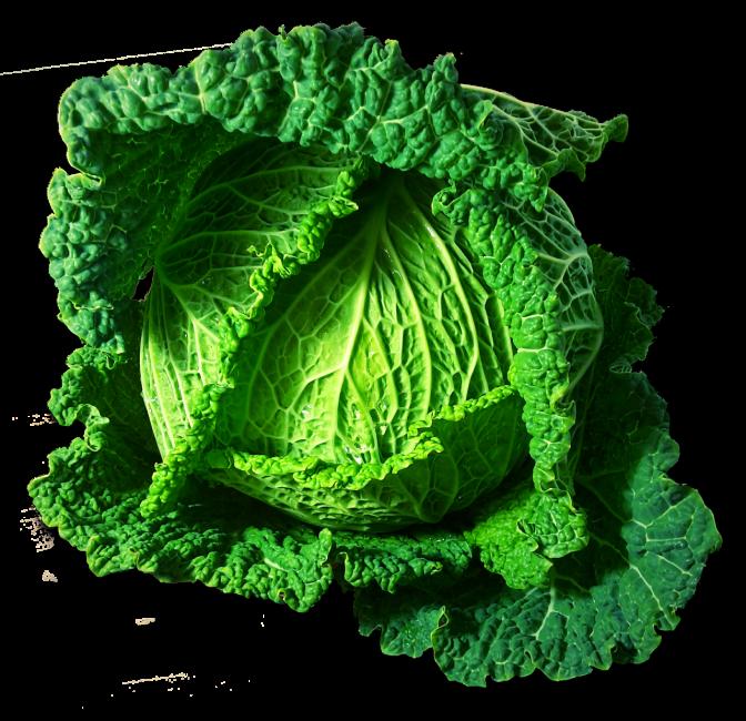 Из савойской капусты получаются прекрасные голубцы, нежные салаты и вкусные щи.