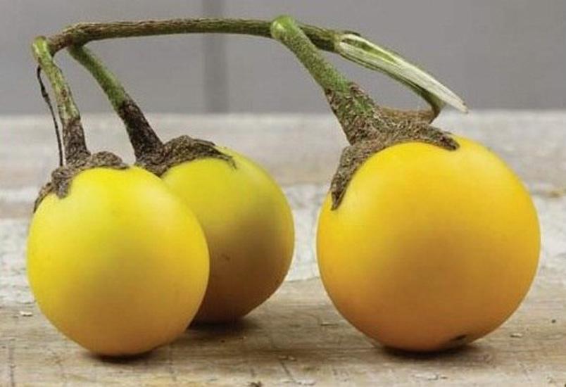 Золотые яйца сорт баклажан