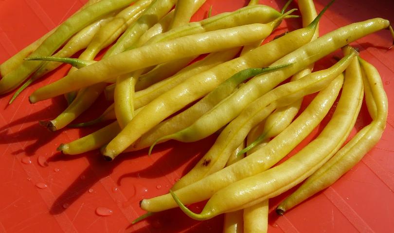 Ещё один раннеспелый сорт – Масляный король. Сорт не просто урожайный, он – деликатесный.