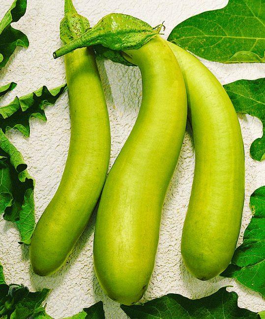 Зелененький F1 сорт баклажан