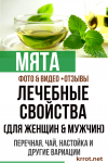 Мята: ее лечебные свойства и противопоказания (для женщин & мужчин), перечная, чай, настойка и другие вариации +Отзывы