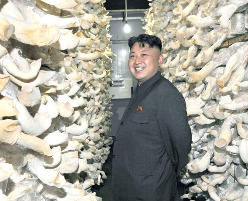 Грибная ферма по производству вешенки в КНДР