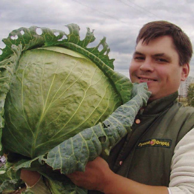Русский размер сорт капусты
