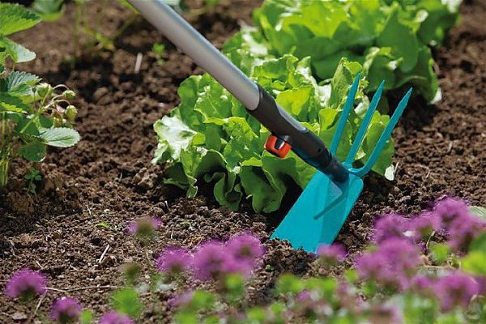 Постоянно садовод обязан пропалывать грядки от сорной травы.