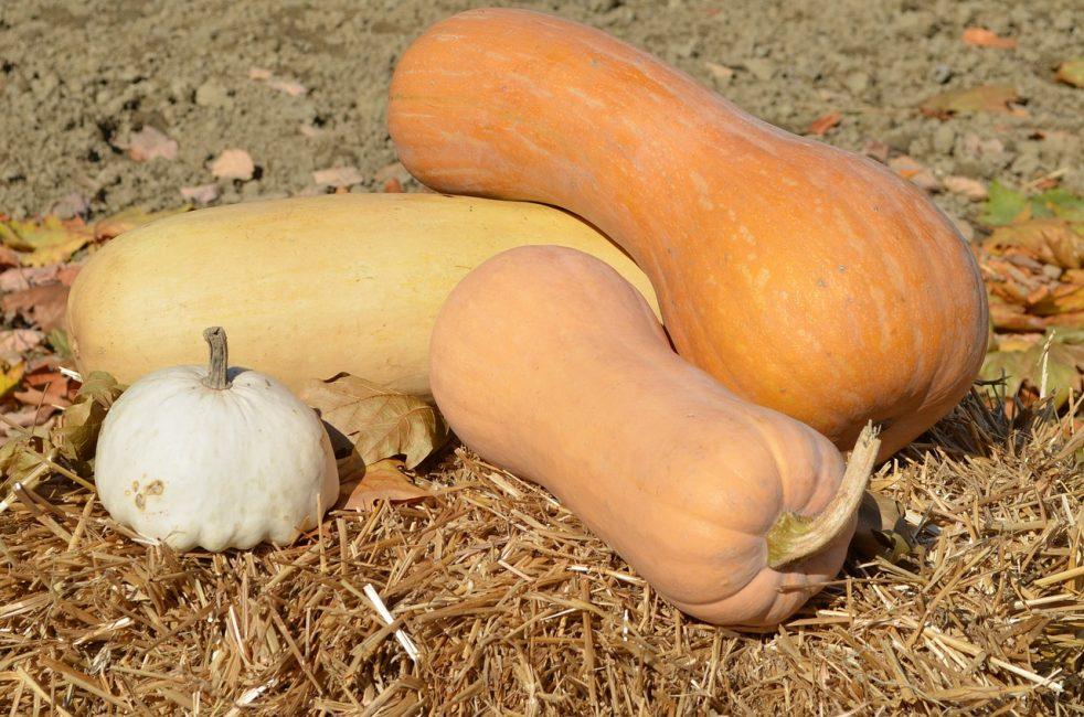 Разновидности твёрдокорой тыквы