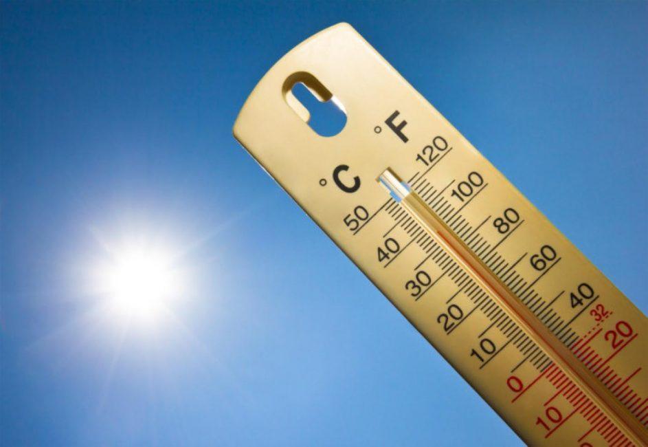 Оптимальная температура для зелени +20 °C