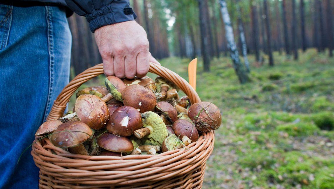 Сохранить здоровье любителям грибов поможет ряд простых правил.