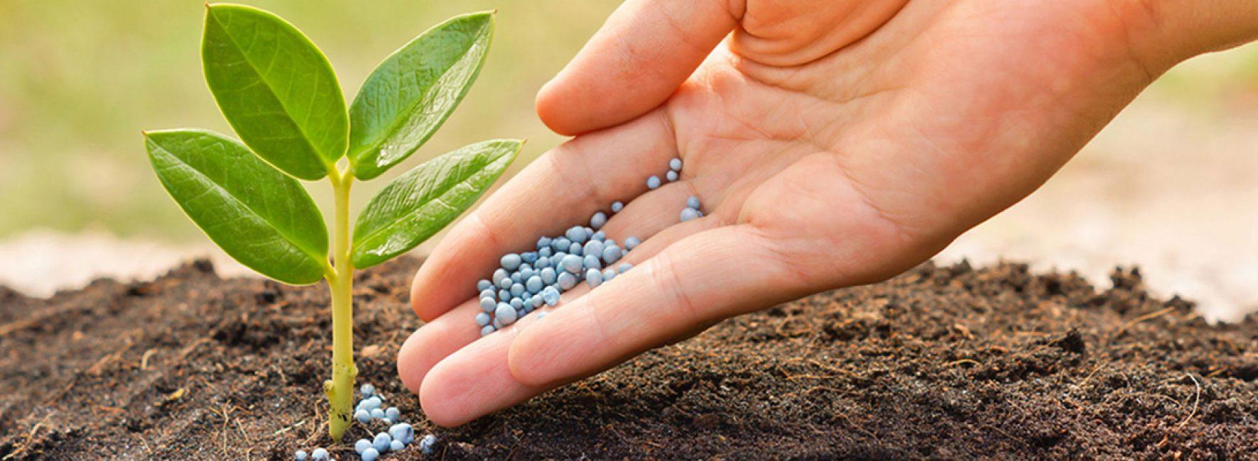 Подкормка растений необходимый процесс