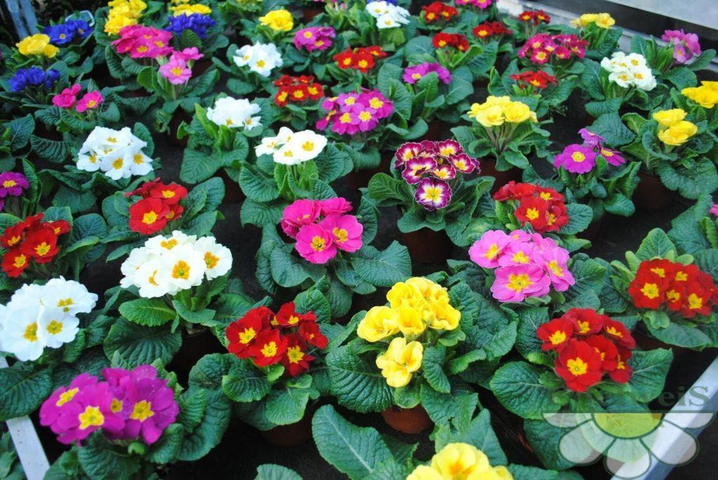 Цветы и цветущие растения фото и названия