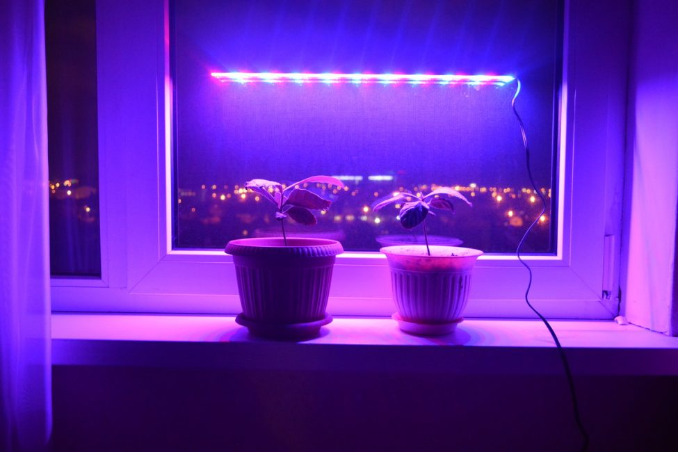 Ультратонкий фитосветильник для окна