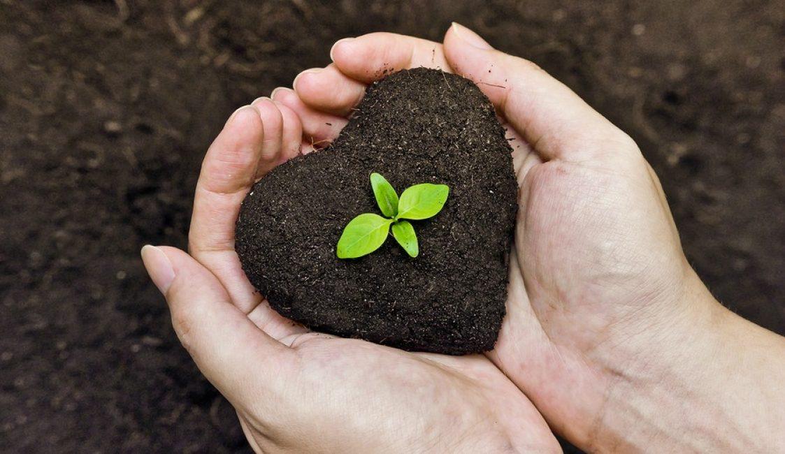 почва для крокусов